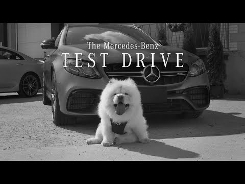 The Mercedes-Benz Test Drive featuring the #dogsofMB | Mercedes-Benz Canada